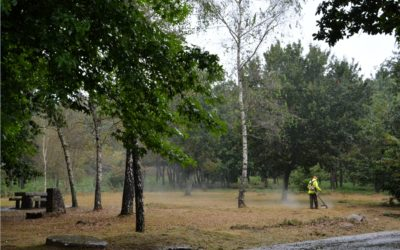 Gestión de las áreas forestales de Vigo